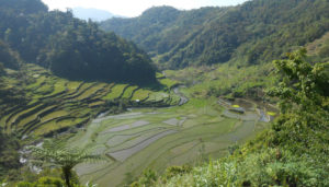 These rice terraces in Banaue are amazing!