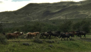 Horses running past Central Camp.