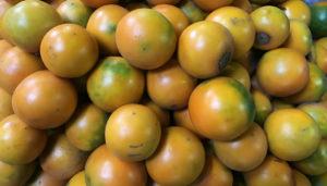 Lulo (Solanum Quitoense)