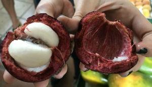 Mangostino open crop
