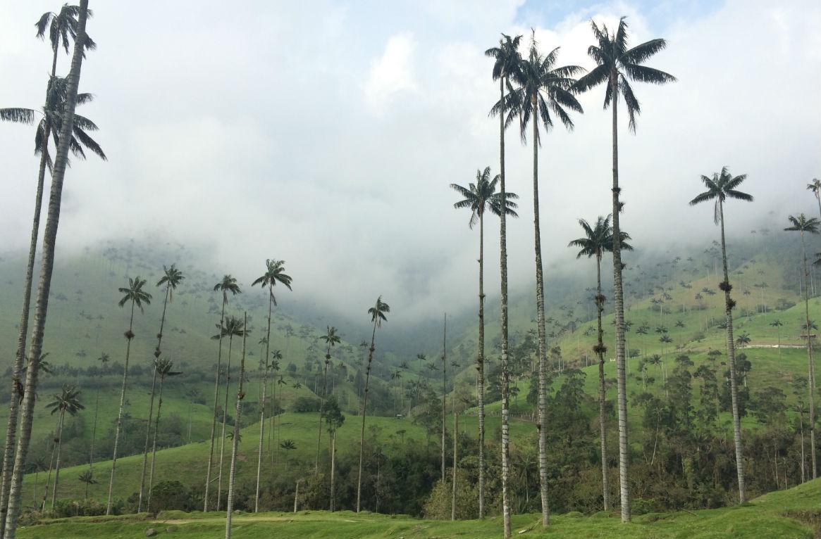 Selento Colombia